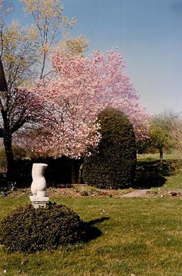 Fairhill garden